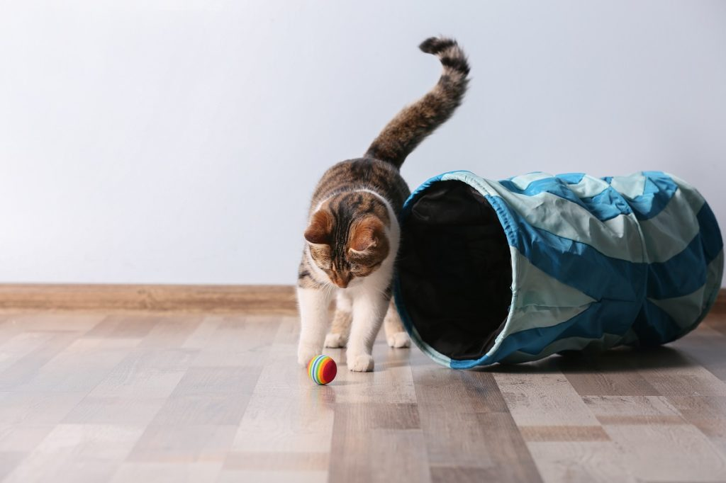 cat playing indoors